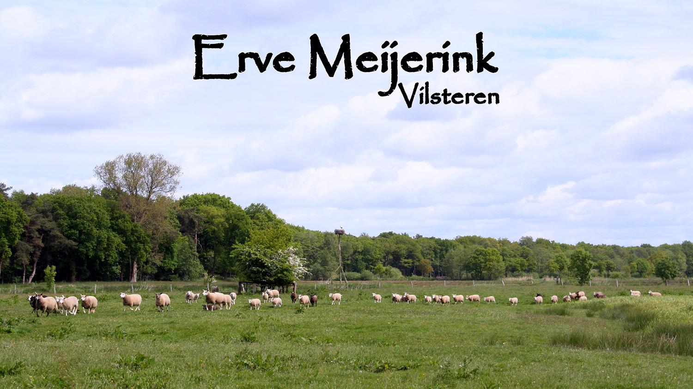 Erve Meijerink